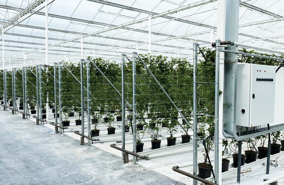 Nieuwe kas gereed planten
